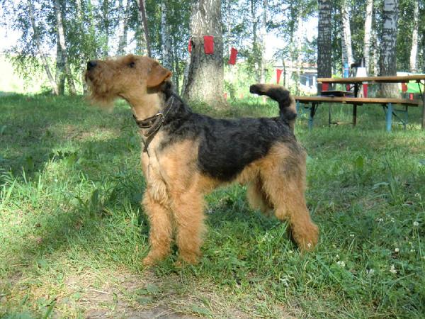 Собаки кемерово