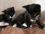 милые котята ищут хозяина