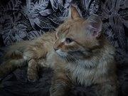 Наполеон,  молодой ласковый котик ищет хозяина!