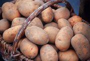 картофель в кемерово