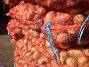 Смешанный картофель Невский и Тулеевский опт от 20 тонн в Кемерово