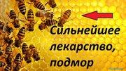 Подмор пчелиный и прополис в Кемерово 8 902 755 3423