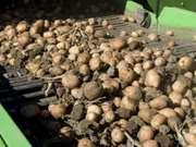 Продам сельхозпредприятие,  кфх,  выращивание картофеля,  производственна